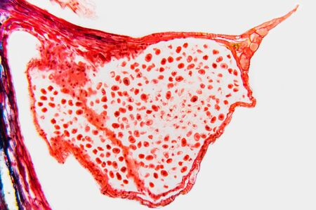 stigma: Reproductive parts: stigma, style, stamens, filament, petal. Structure floral- male reproductive organ of the flower of angiosperms Stock Photo