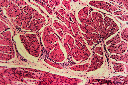 Medical anatomy Bladder Cat Cells - abstract science background. Learning and teaching biology prepared microscope slides. Histological preparation- dissection of animal tissue into thin layers with microtome