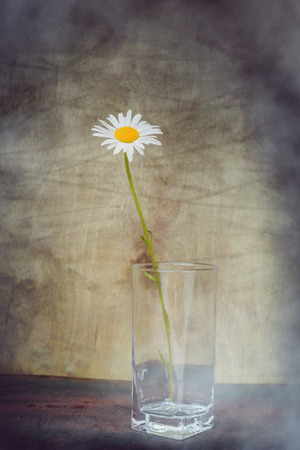 Still life- beautiful daisy flower in the empty vase transparent