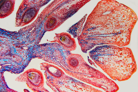 Abstract nature background- reproductive system flower. Ovary and ovule- plant cell. Imagens - 84204001