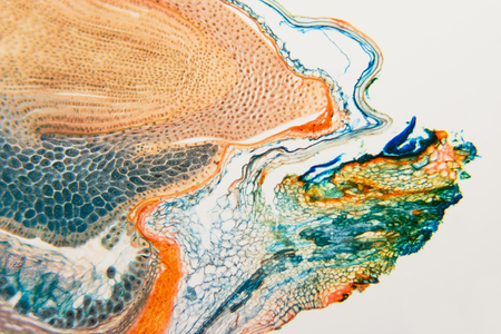 Nature pattern: cross-section weevil rye. Beautiful vegetable background. Biological prepared microscope slides