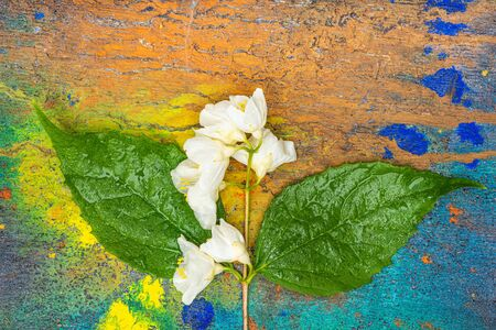 Sprig of flowers is a paper surface. Nature background- art plant