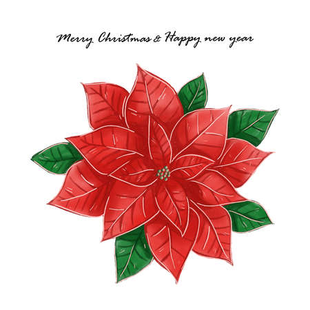 Merry Christmas and happy new year festival with poinsettia flower or Christmas Star watercolor background vector