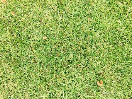 design: Green grass design background texture