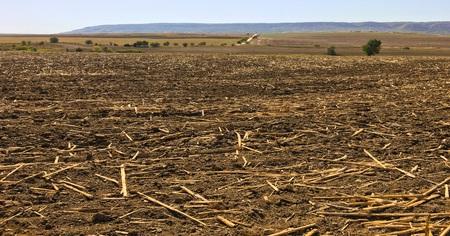 peat soil as a background. Dirt texture as background Reklamní fotografie - 86873342