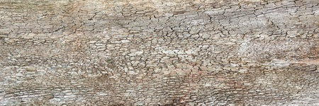 Natural old brown crust wood texture pattern or bark wood background for interior or exterior design with copy space for text or image. Close-up bark, forest vintage. Macro crust tree