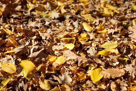beautiful colorful autumn leaves on ground, falling autumn leaves in forest