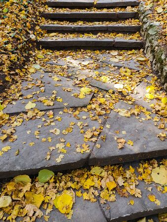 yellow autumn leaves on stone stairs of city park. vignette, background, seasonal