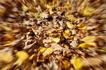 beautiful blured colorful autumn leaves on ground, falling autumn leaves in forest. blurs autumn leaf