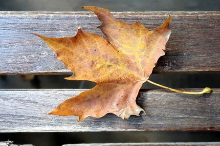 background texture with old wooden table and yellow autumnal fallen maple leaf