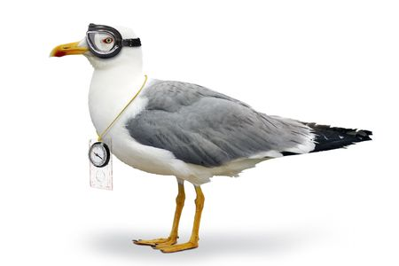 Seagull with goggles of pilot and compass Stock Photo