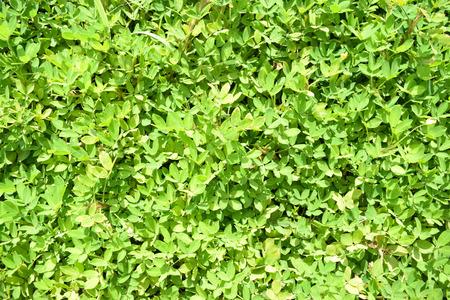 ダナンで自然な美しい、カラフルな植物 写真素材