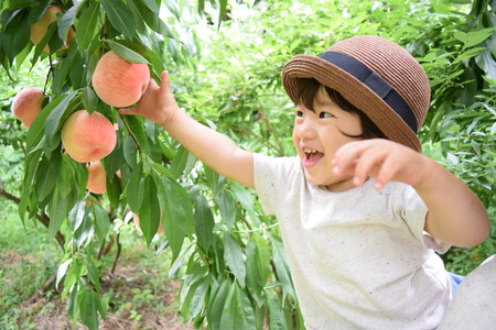 cute boy is picking fruits which are peaches