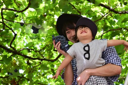 Vader en zijn zoon plukken druiven Stockfoto