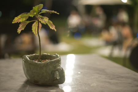 close up Plant in vase at outdoor table Imagens