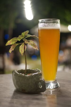 beer mug on table with palnt in vase