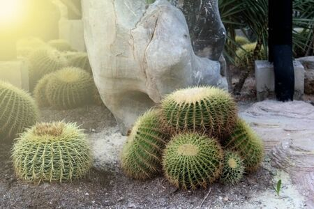 It is a cactus in a cactus garden