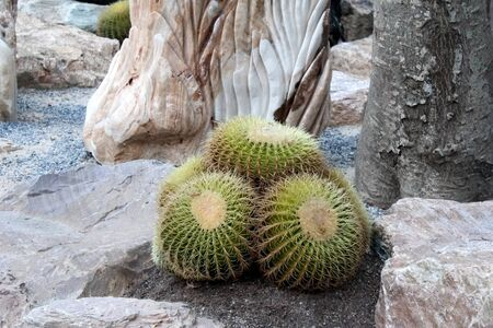 It is a cactus in the cactus garden