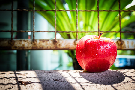 fruitage: fresh red apple on cement wall with cage,lighting and shadow style. Stock Photo