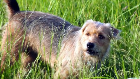 happy dog play in green grass photo