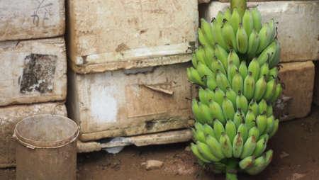 krottenwijk: banaan in sloppenwijk