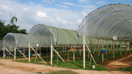 horticulture: a plastic covered horticulture greenhouse of garden center selling flowers and plants Stock Photo