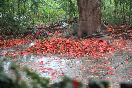 Autumn leaves on the ground after rain