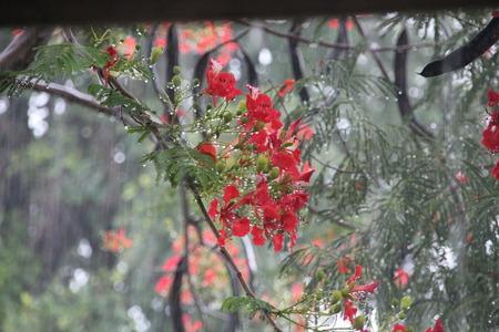 delicated: Rainy day