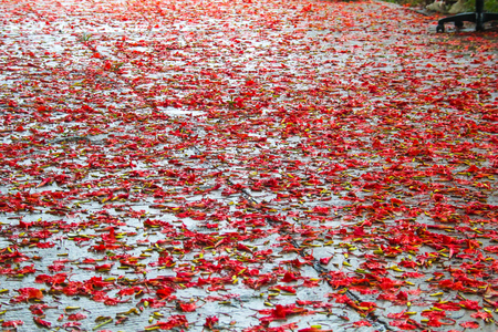 flame like: the leaves on the ground after rain