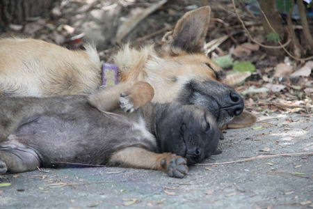 pupy: puppy sleeping with his mother Stock Photo