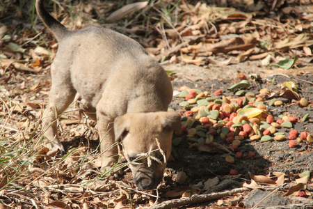 pupy: hungry stray dog is eating dog food that humanitarian bring to