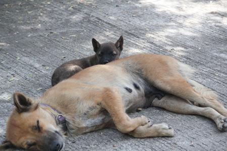 pupy: puppy dog with mom lying on street Stock Photo