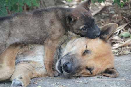 pupy: ginger dog with a puppy