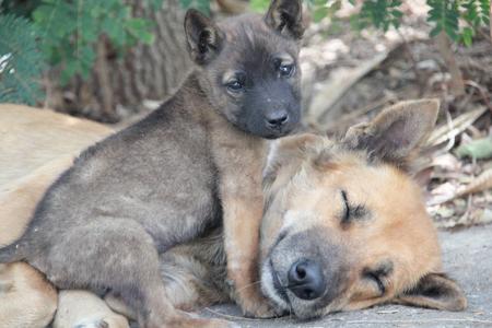 子犬と生姜の犬