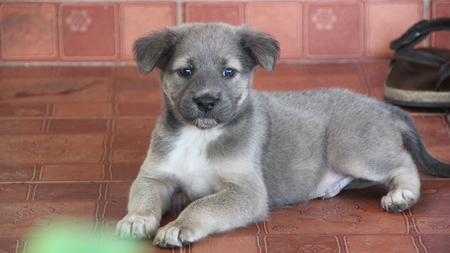 pupy: cute dog looking camera, Sad looking and waiting for Stock Photo