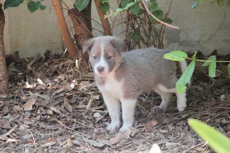 pupy: cute dog looking camera, Sad look of a cute stray dog Stock Photo