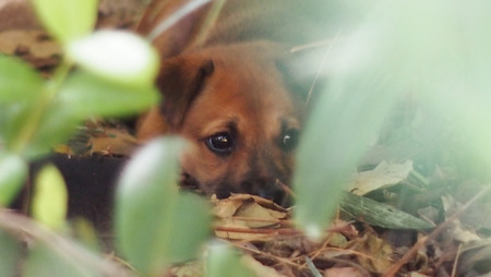 puppy stray dogs lost his mom and scare people. Its hidden in the forest. Note : use a hand lens rotation.