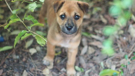 pupy: puppy stray dogs lost his mom and scare people. Its hidden in the forest. Note : use a hand lens rotation.