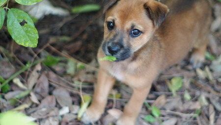 scare: puppy stray dogs lost his mom and scare people. Its hidden in the forest. Note : use a hand lens rotation.
