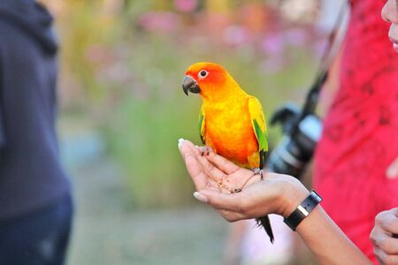 Parrot in hand, Parrot is a pet that is popular with birds.