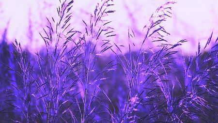 Purple meadow texture background, color blindness, Medical treatment