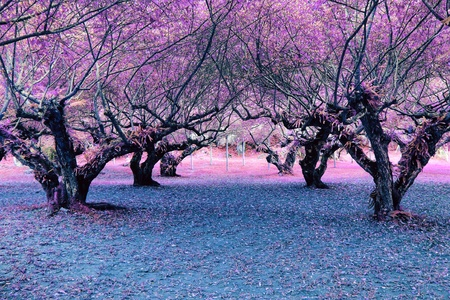 fantasy tree, pink tree in the garden, fantasy nature landscape background