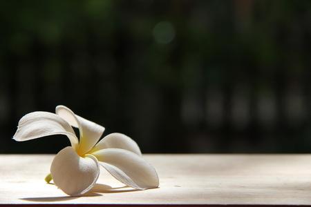Plumeria flower wood background, montage