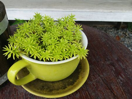 lovely small plant in pot on wood table in garden of house