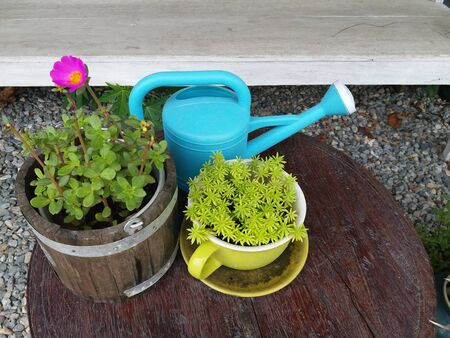 lovely small plant in pot and water pot on wood table in garden