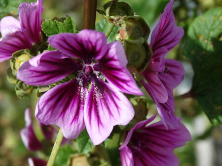 Bright Purple Flower Reklamní fotografie