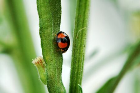 A ladybird walking along a stem of plant Stock Photo - 647192