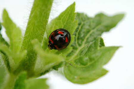 A photo taken from top view of a ladybird Stock Photo - 647189