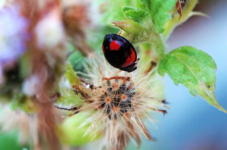 Like a painting picture of ladybird Stock Photo - 647190