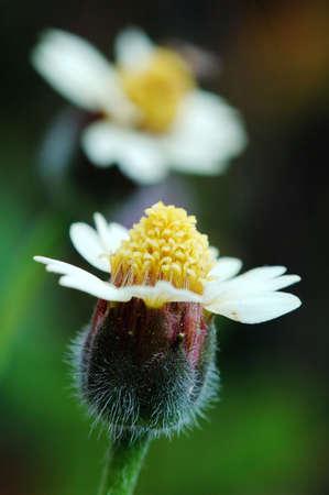 flores peque�as: Dos peque�os amantes de las flores como muestra en la imagen  Foto de archivo